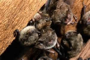 Critter Round Up Wildlife And Pest Control Services